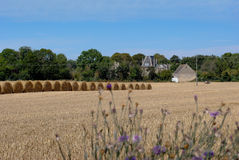 Grain harvest in Normandy. With rolls of hay Stock Images