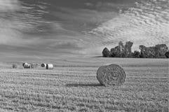 Grain harvest in summertime Stock Photography