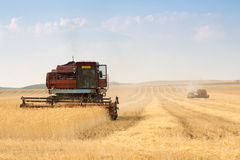 Grain harvester combine Stock Image