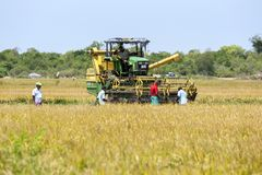 A grain harvester is moved into position to begin reaping a field of rice near Panama in Sri Lanka. A group of farmers watch as a mechanical harvester is moved Stock Image