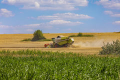 Grain harvesting combine on field in summer day Royalty Free Stock Photos
