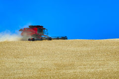 Grain Harvesting. A combine works a hillside harvesting grain in rural Oregon Royalty Free Stock Photos