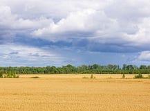Grain harvesting Stock Images