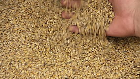 Grain stock footage