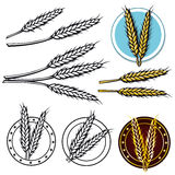 Grain icon Royalty Free Stock Photo
