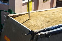 From a grain-laden lorry take grain for analysis, grain processing, granule royalty free stock photo