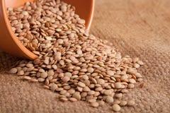Grain lentils Stock Photo