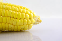 Grain maize,fresh corn Stock Photography
