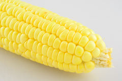 Grain maize,fresh corn Stock Images
