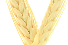 Grain minimum depth of field Royalty Free Stock Image
