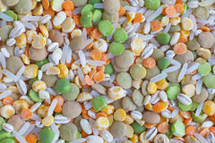 Grain mix. Background (beans, rice, lentil, etc royalty free stock photos