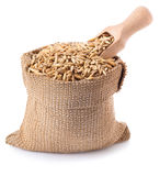 Grain oats in bag with a wooden scoop isolate Royalty Free Stock Photo