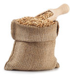 Grain oats in burlap bag with a wooden scoop isolate Royalty Free Stock Image