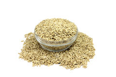 Grain oats in a glass Royalty Free Stock Image
