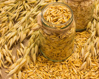 Grain oats and oatmeal on canvas Royalty Free Stock Image