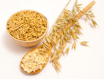Grain oats and oatmeal Royalty Free Stock Photography