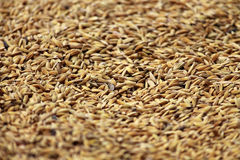Grain Stock Photography