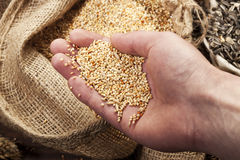 Grain quality control Royalty Free Stock Photos