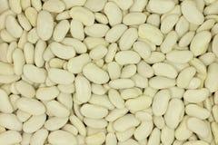Grain raw white beans  background Stock Photo