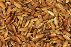 Grain rice with bran shell background Royalty Free Stock Photo