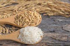 Grain and rice on wood table. Grain and rice on old wood table royalty free stock photos