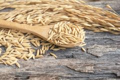 Grain and rice on wood table. Grain and rice on old wood table stock images