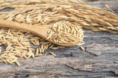 Grain and rice on wood table. And spoon stock image