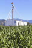 Grain Silos and Corn Field Stock Images