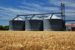 Grain silos. Farm, wheat field with grain silos for agriculture royalty free stock image