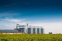 Grain Silos in Sunflower Field. Set of storage tanks cultivated agricultural crops processing plant royalty free stock photos