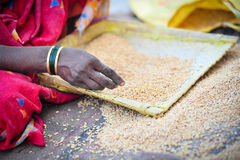Grain sorting. Indian woman sorting the good and bad grain of cereal Royalty Free Stock Images