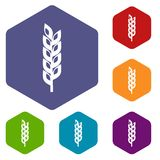 Grain spike icons set hexagon Stock Images