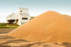 Grain storage silos. Harvest concept. Hill of grain, wheat, rye, barley, corn, rape, etc. Granary with mechanical equipment. Grain storage silos. Harvest royalty free stock photo