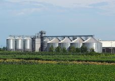 Grain storage site with corrugated steel silos and grain distribution system shine under the summer sun behind agricultural fields.  royalty free stock image