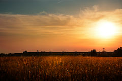 The grain. The sun on the grain stock photo