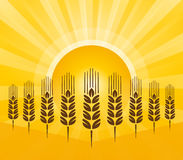 Grain with sun rays Royalty Free Stock Photography