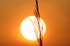 Grain at sunset. A stock of grain is silhouetted by the setting sun in rural Alberta,Canada stock images