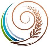 Grain swirl Stock Image