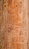 Grain. Termites eat wood, very beautiful Royalty Free Stock Photography