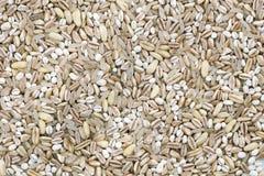Grain Texture Stock Image