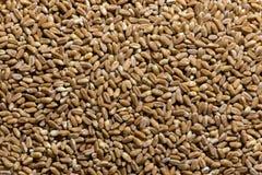 Grain texture Stock Images