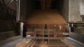 Grain truck unloading. Kiev, Ukraine - Fedruary 2017: Grain truck unloading. Unloading wheat grain from grain truck on mill. Truck unloads grain on the granary stock video
