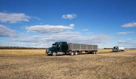 Grain trucks in a field Stock Image