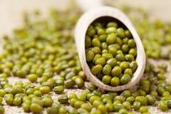 Grain végétarien sain naturel de légumineuse de fèves de mung Photo libre de droits