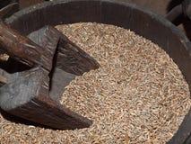 Grain in vintage Barrel Royalty Free Stock Photo