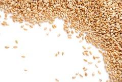 Grain of the wheat Stock Photos