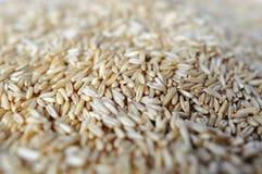 Grain of wheat Stock Photo