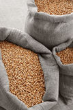 Grain of the wheat in bags royalty free stock photo