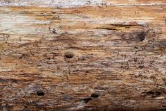 Wood Grain of a Pine Tree stock images