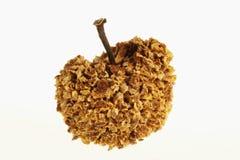 Graine d'arbre d'automne Photographie stock libre de droits